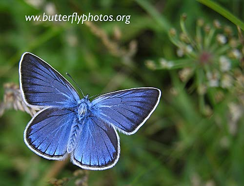 Photos of Butterflies